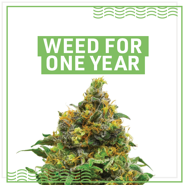 Enter for a chance to win one year worth of cannabis. Terms and Conditions apply. See below for more details.